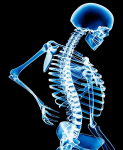 Blog post 21Sep11 Bone health 123x150 Nutrients That Improve Bone Health